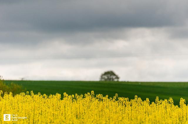 オランダを世界第2位の農業大国に押し上げたスマートアグリ:農業×ITの相乗効果が日本の救世主に 1番目の画像
