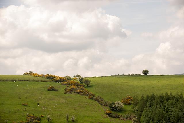驚異のGDP成長率26%を示すアイルランド:急成長の裏にある「タックスヘイブン」という闇 1番目の画像