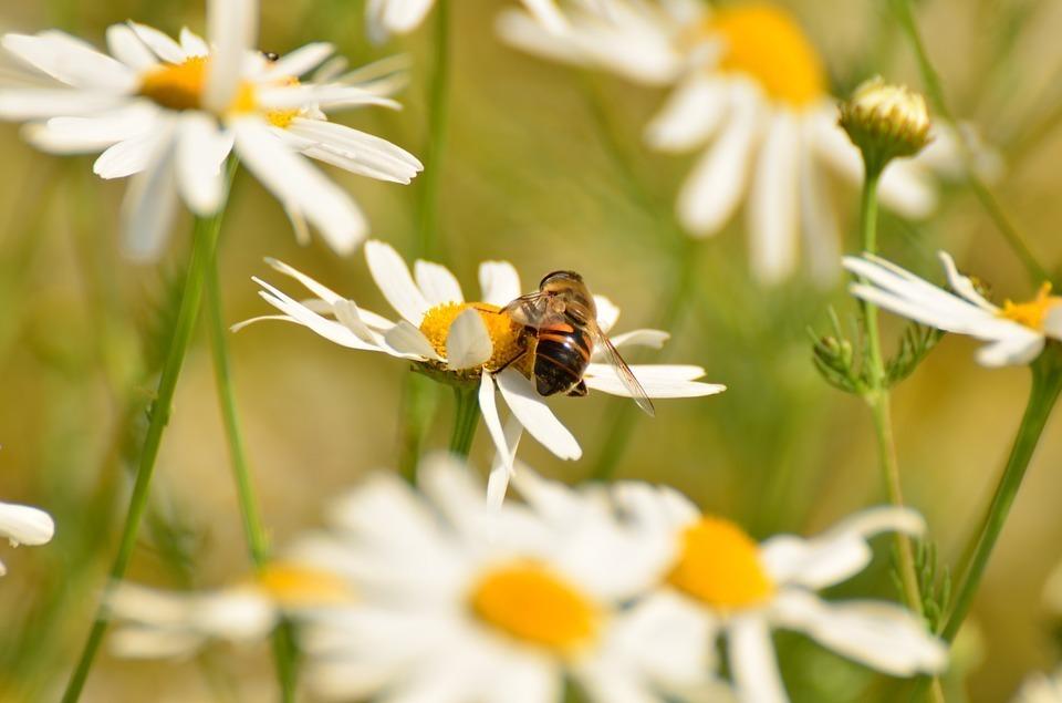 虫嫌いは閲覧注意! いつか当たり前になるかもしれない「昆虫食」の可能性について考える 1番目の画像