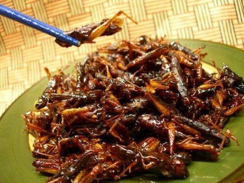 虫嫌いは閲覧注意! いつか当たり前になるかもしれない「昆虫食」の可能性について考える 3番目の画像