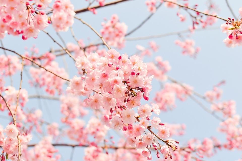 定番でも場所取りしやすい穴場!宴会可能な東京都内の花見スポット6選&花見の持ち物 1番目の画像