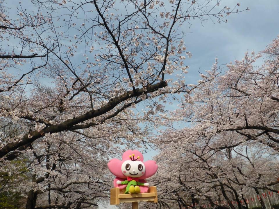 定番でも場所取りしやすい穴場!宴会可能な東京都内の花見スポット6選&花見の持ち物 4番目の画像