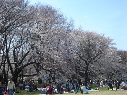 定番でも場所取りしやすい穴場!宴会可能な東京都内の花見スポット6選&花見の持ち物 7番目の画像