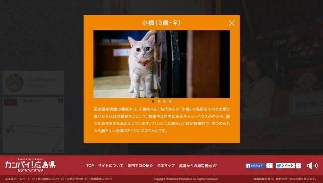 """""""猫目線""""のデジタルマップ「広島Cat Street view」が世界的な広告賞を受賞! 4番目の画像"""