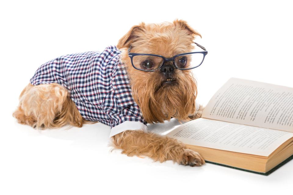 書くことを楽しむ秘訣は「何度も好きな文章に触れる」こと 2番目の画像