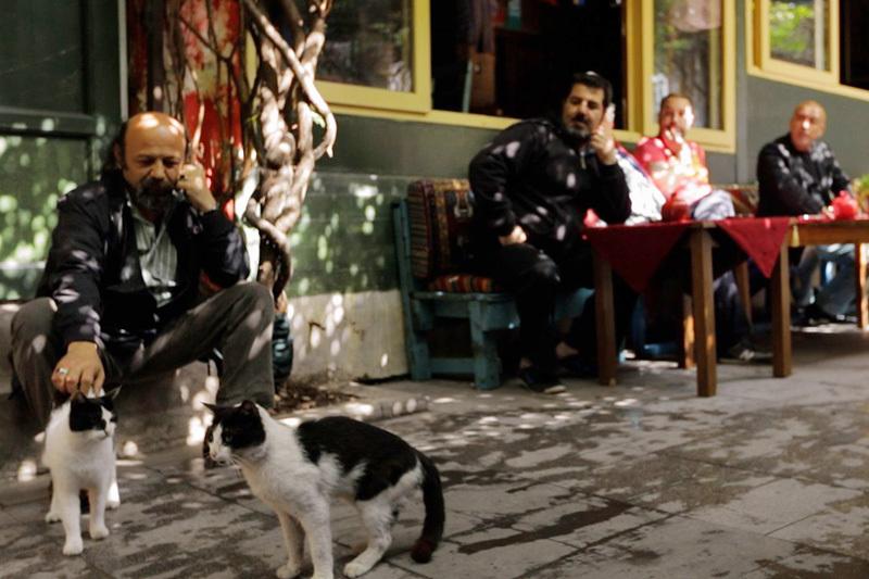 イスタンブールの猫はペットじゃなく野良。究極の猫映画「猫が教えてくれたこと」 4番目の画像