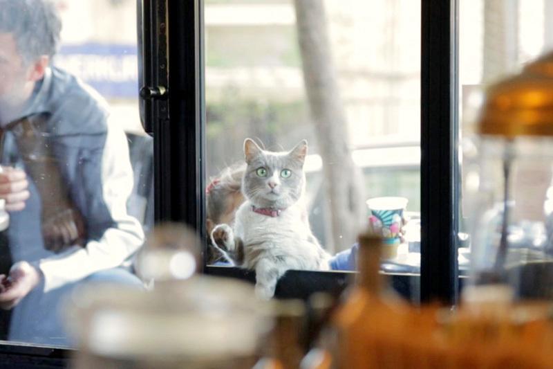 イスタンブールの猫はペットじゃなく野良。究極の猫映画「猫が教えてくれたこと」 5番目の画像