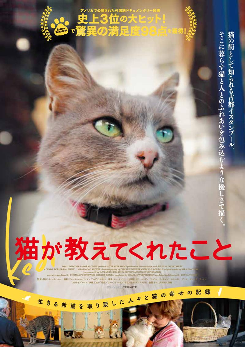 イスタンブールの猫はペットじゃなく野良。究極の猫映画「猫が教えてくれたこと」 8番目の画像