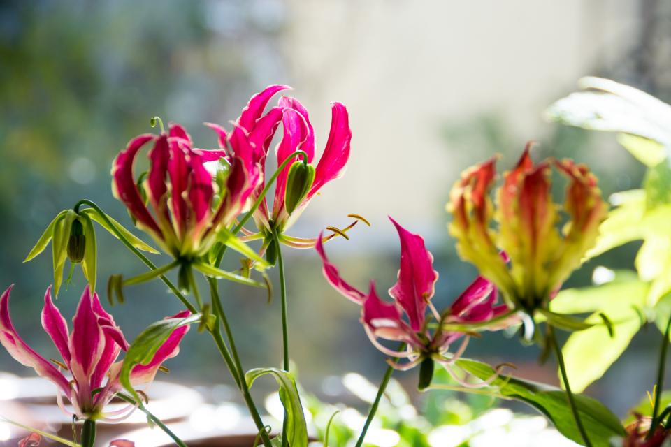 【送別会の花選び】送別会のときに覚えておきたい花選びのポイント 4番目の画像