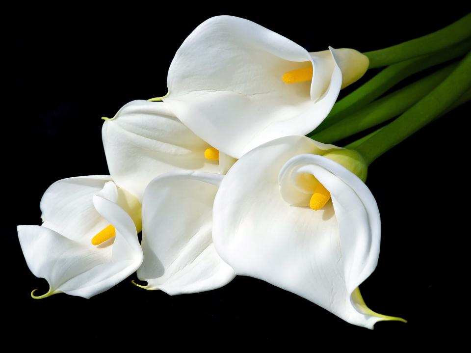 【送別会の花選び】送別会のときに覚えておきたい花選びのポイント 5番目の画像