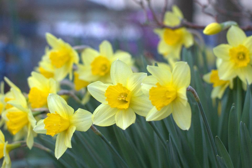 【送別会の花選び】送別会のときに覚えておきたい花選びのポイント 6番目の画像