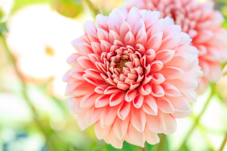 【送別会の花選び】送別会のときに覚えておきたい花選びのポイント 2番目の画像