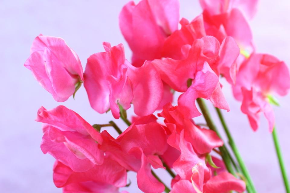 【送別会の花選び】送別会のときに覚えておきたい花選びのポイント 3番目の画像
