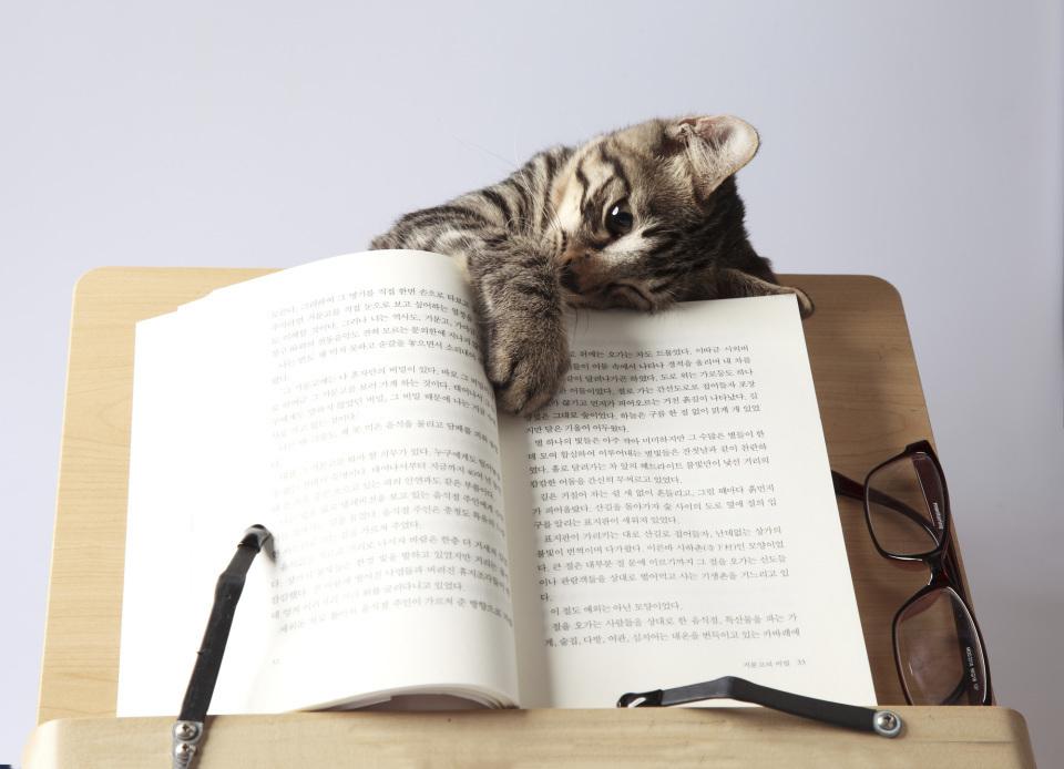 英語初心者におすすめしたい洋書!英語の語彙を増やしたい人におすすめの洋書3選 1番目の画像