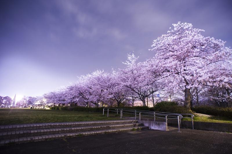定番でも場所取りしやすい穴場!宴会可能な東京都内の花見スポット6選&花見の持ち物 8番目の画像