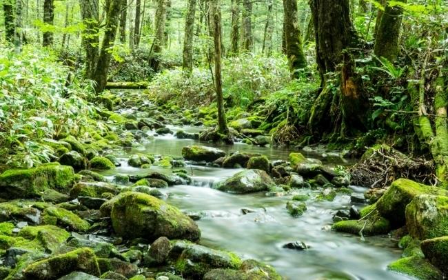 音と香りでオフィスに森を再現!法人向けサブスクサービス「森のアロマ」 1番目の画像