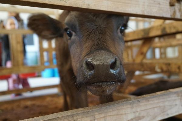 移住者には子牛を1頭プレゼント!鹿児島の離島「三島村」が東京・日本橋で移住相談会を開催 1番目の画像