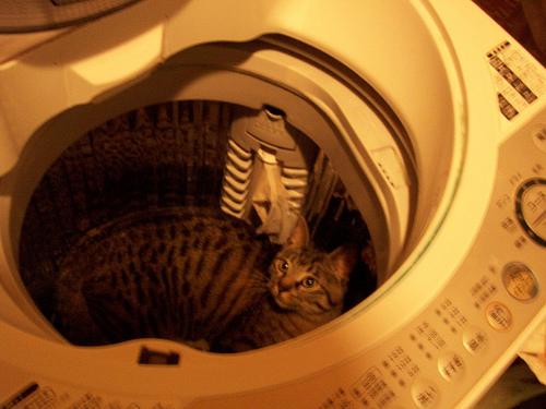 【洗濯の仕方】勝負服のワイシャツがシワだらけにならないコツは脱水にあった 1番目の画像