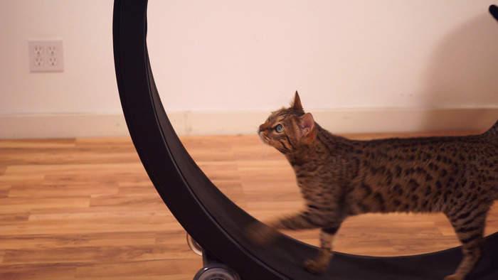 飼い猫をとっとこ走らせるホイール型のランニングマシン「OneFastCat」 1番目の画像