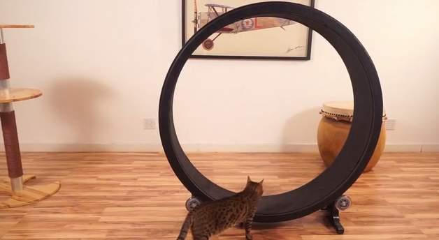 飼い猫をとっとこ走らせるホイール型のランニングマシン「OneFastCat」 2番目の画像