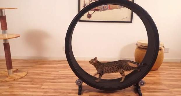 飼い猫をとっとこ走らせるホイール型のランニングマシン「OneFastCat」 3番目の画像