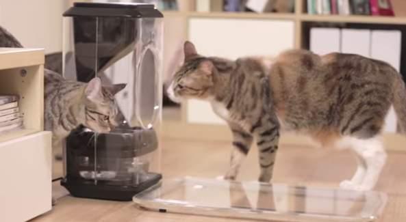 家に残してきた猫、心配じゃありませんか?猫の顔を認識して自動で餌やりする給餌機「Bistro」 1番目の画像
