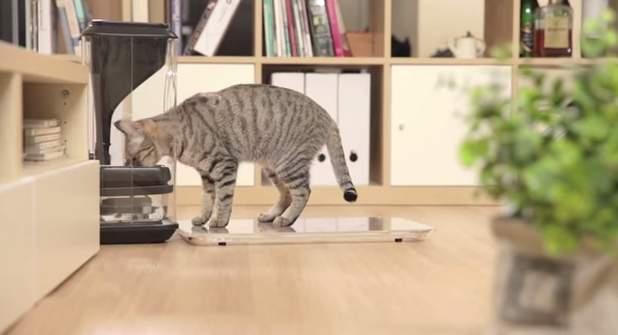 家に残してきた猫、心配じゃありませんか?猫の顔を認識して自動で餌やりする給餌機「Bistro」 4番目の画像