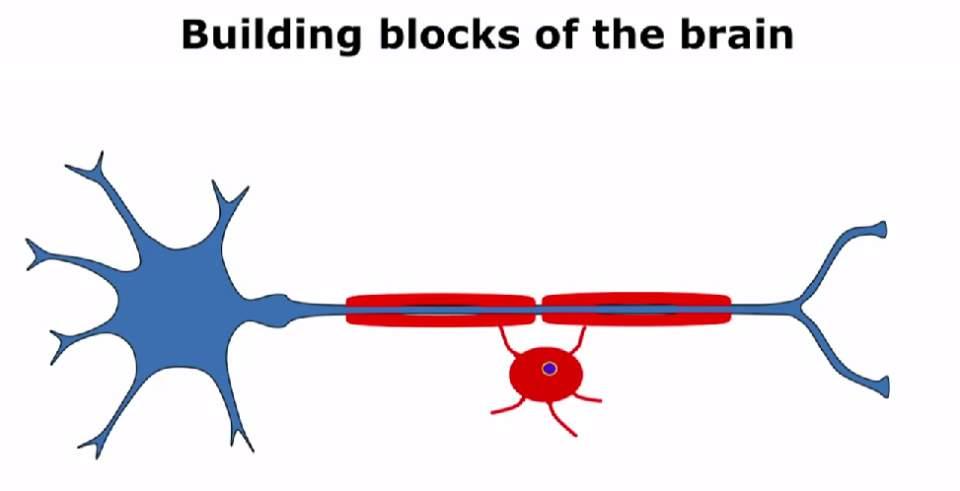 【全文】なぜ「iPS細胞」は破壊的な新技術と呼ばれたのか?――損傷した脳は自力回復できるか 3番目の画像