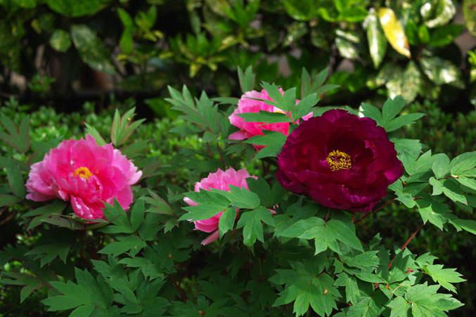 たまには桜以外のお花見もいいよね。関東近郊で見られる春に咲く花まとめ 6番目の画像