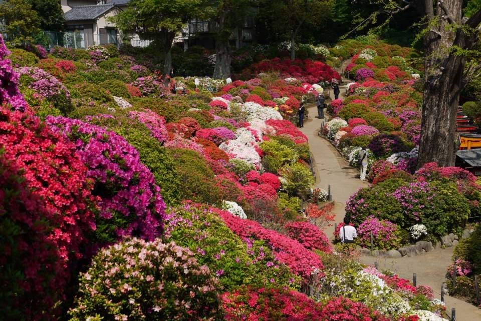 たまには桜以外のお花見もいいよね。関東近郊で見られる春に咲く花まとめ 5番目の画像