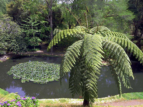 八丈島の経済を支える謎の植物「ロベ」って何のこと? 観光だけじゃない、離島ビジネス最前線を追う 2番目の画像