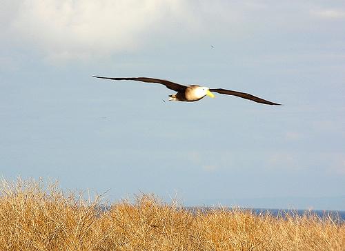 自然をお手本にした心地よい風。シャープの扇風機に搭載される「ネイチャーウイング」 3番目の画像
