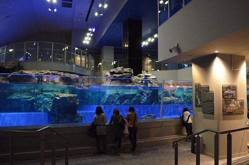 新たな水族館・博物館が地方活性化の起爆剤に! 水族館大国・日本で大企業が挑む、水族館のカタチ 3番目の画像