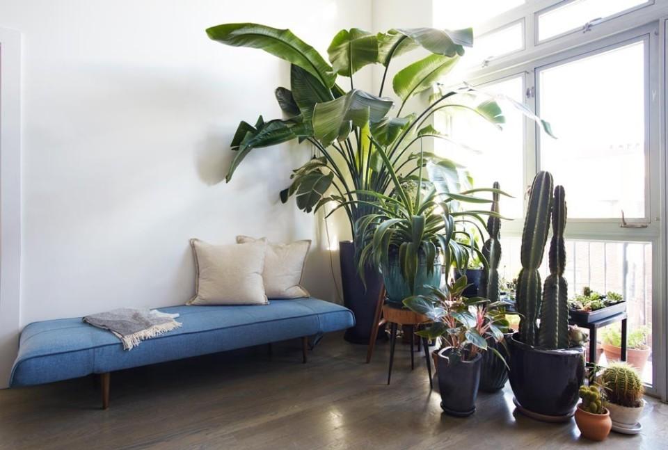 """リビングに""""観葉植物""""がある暮らし:目にも美しく健康まで守ってくれる「4つのおすすめ観葉植物」 2番目の画像"""