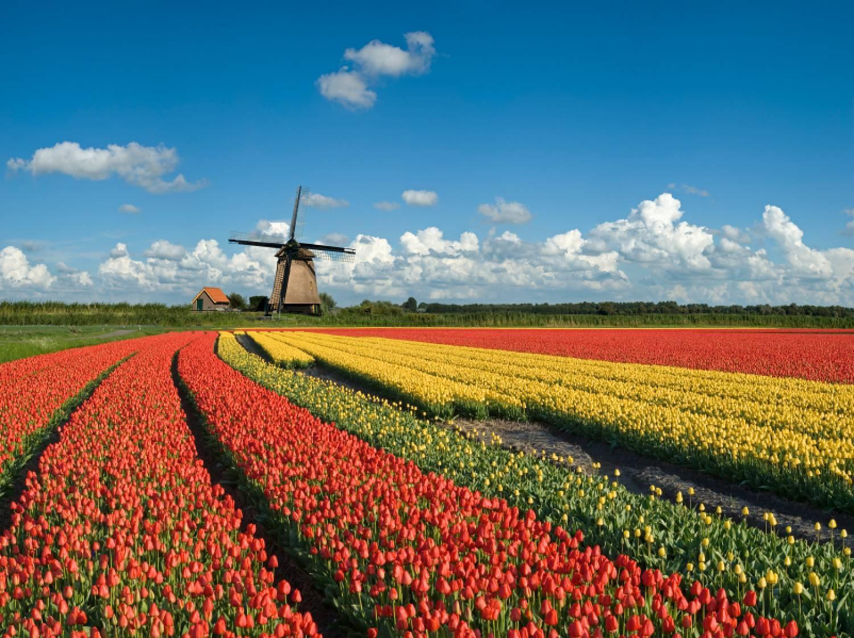 オランダを世界第2位の農業大国に押し上げたスマートアグリ:農業×ITの相乗効果が日本の救世主に 3番目の画像