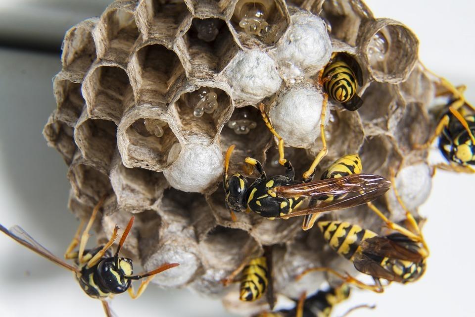 虫嫌いは閲覧注意! いつか当たり前になるかもしれない「昆虫食」の可能性について考える 4番目の画像