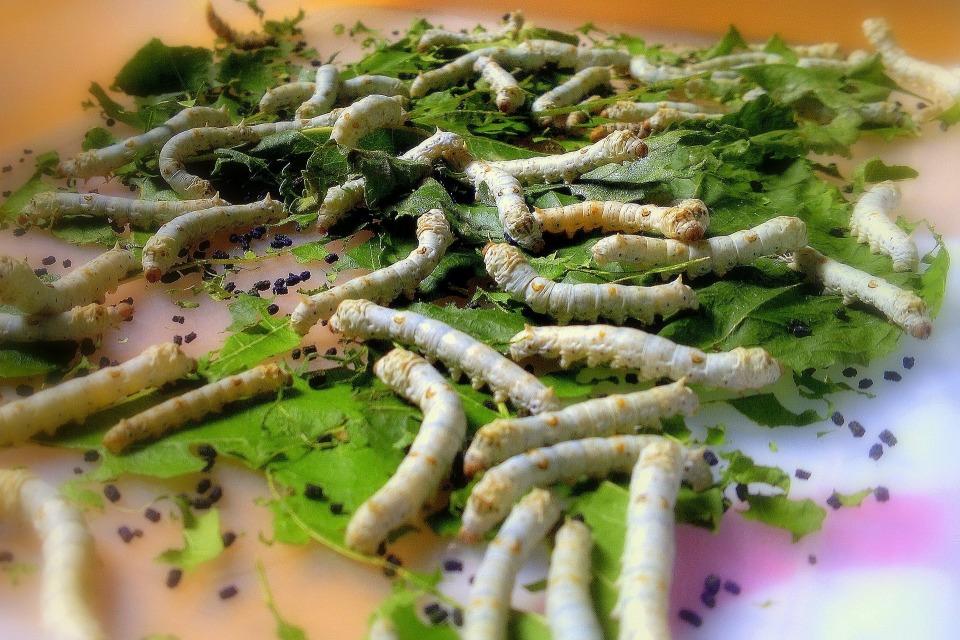 虫嫌いは閲覧注意! いつか当たり前になるかもしれない「昆虫食」の可能性について考える 5番目の画像