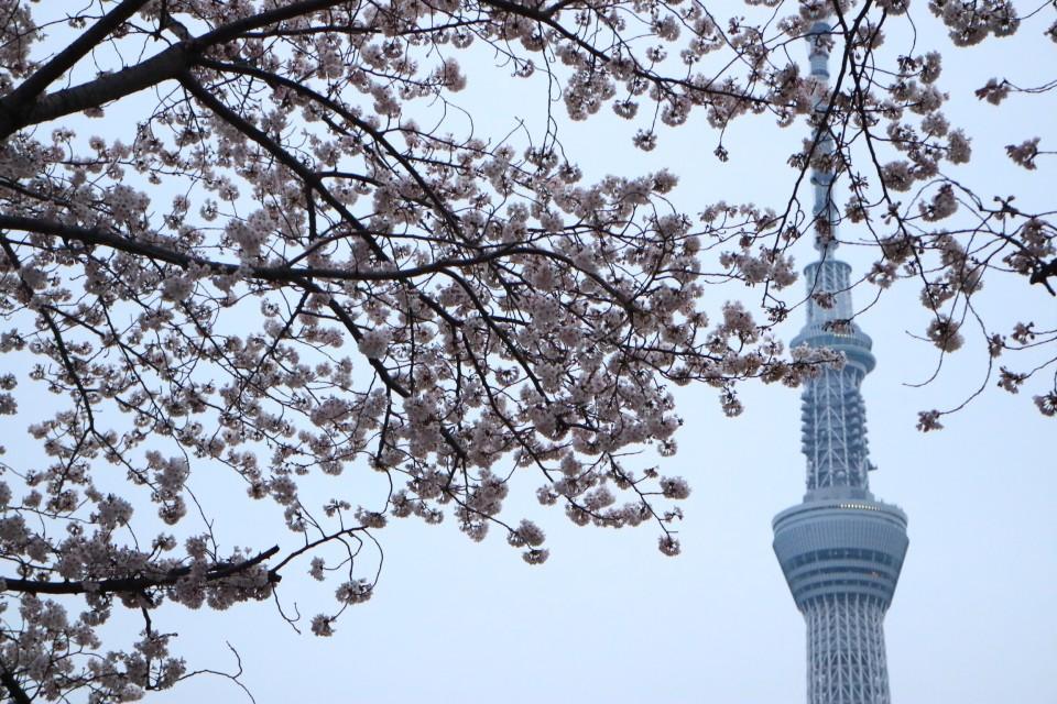 定番でも場所取りしやすい穴場!宴会可能な東京都内の花見スポット6選&花見の持ち物 2番目の画像