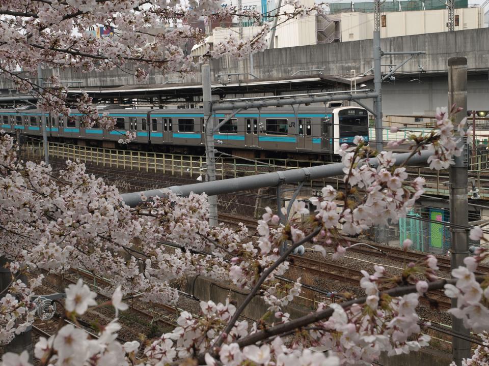 定番でも場所取りしやすい穴場!宴会可能な東京都内の花見スポット6選&花見の持ち物 5番目の画像