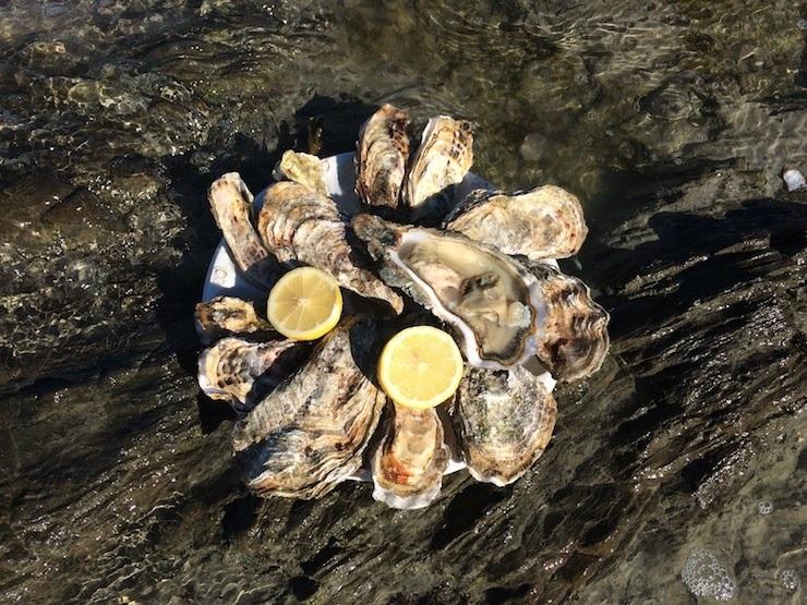 フランスの生牡蠣は日本と違う?ルイ14世も愛した、牡蠣の世界的名産地・カンカルを訪ねて 1番目の画像