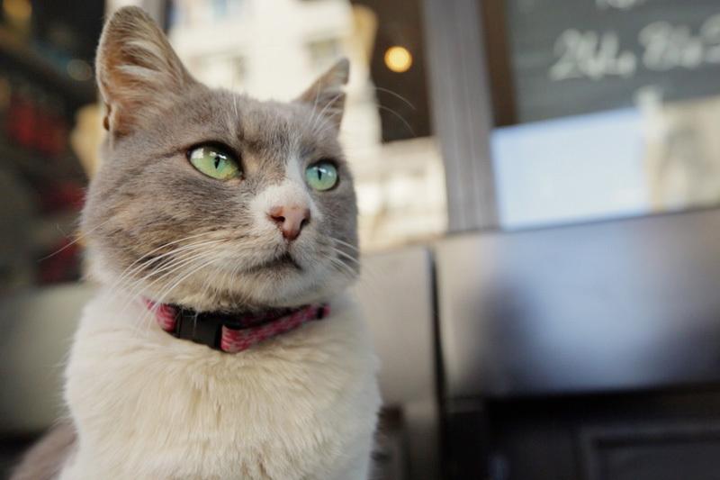 イスタンブールの猫はペットじゃなく野良。究極の猫映画「猫が教えてくれたこと」 1番目の画像