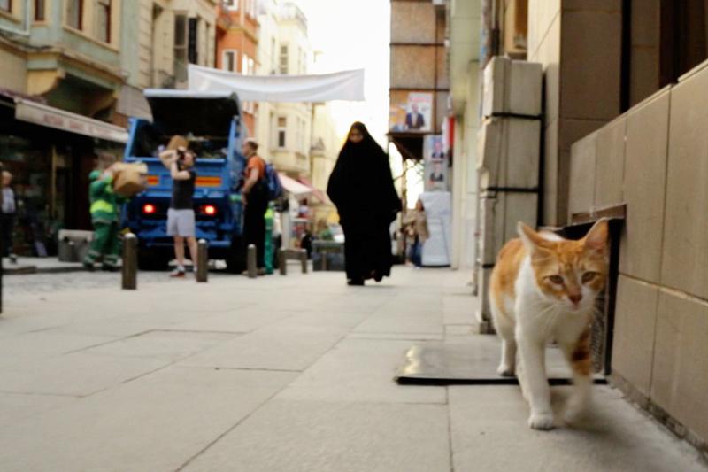 イスタンブールの猫はペットじゃなく野良。究極の猫映画「猫が教えてくれたこと」 3番目の画像