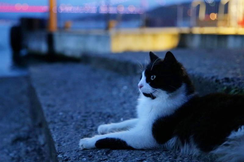 イスタンブールの猫はペットじゃなく野良。究極の猫映画「猫が教えてくれたこと」 7番目の画像