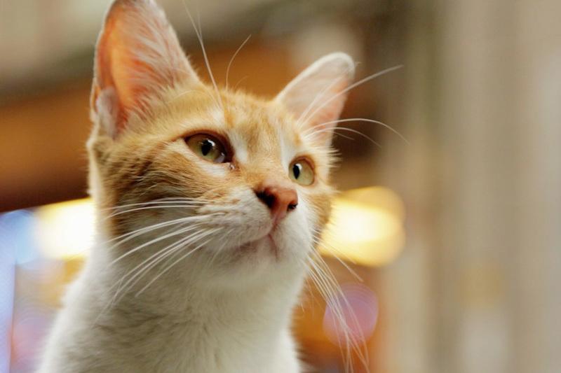 イスタンブールの猫はペットじゃなく野良。究極の猫映画「猫が教えてくれたこと」 2番目の画像