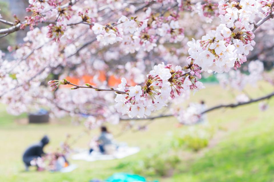 【花見幹事の役立ちマニュアル】花見当日までの段取り7ステップ&知っておきたい基本マナー 8番目の画像