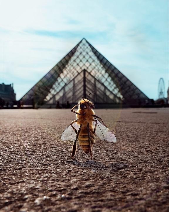 14万フォロワーの「ミツバチのインフルエンサー」!ミチバチ減少問題啓発のため 1番目の画像