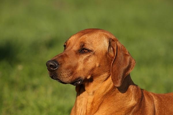 20~30代のビジネスパーソンが「上司にしたい動物」1位は犬|doda調べ 1番目の画像