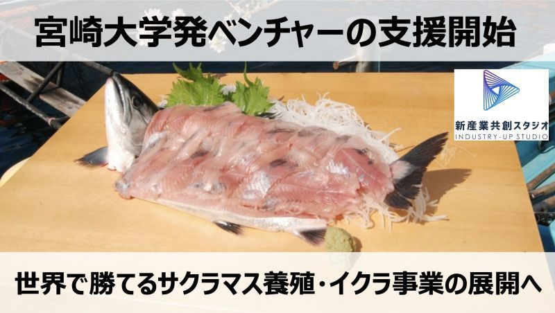 宮崎大学発「サクラマス養殖ベンチャー」 元レノボ・ジャパン社長のサポートで世界で勝てる養殖産業を目指す 1番目の画像