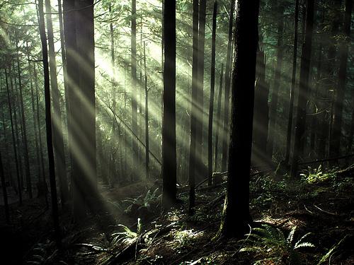 【初心者の為のマーケティング用語解説】「金のなる木」の意味とマーケティングとしての活用法 1番目の画像